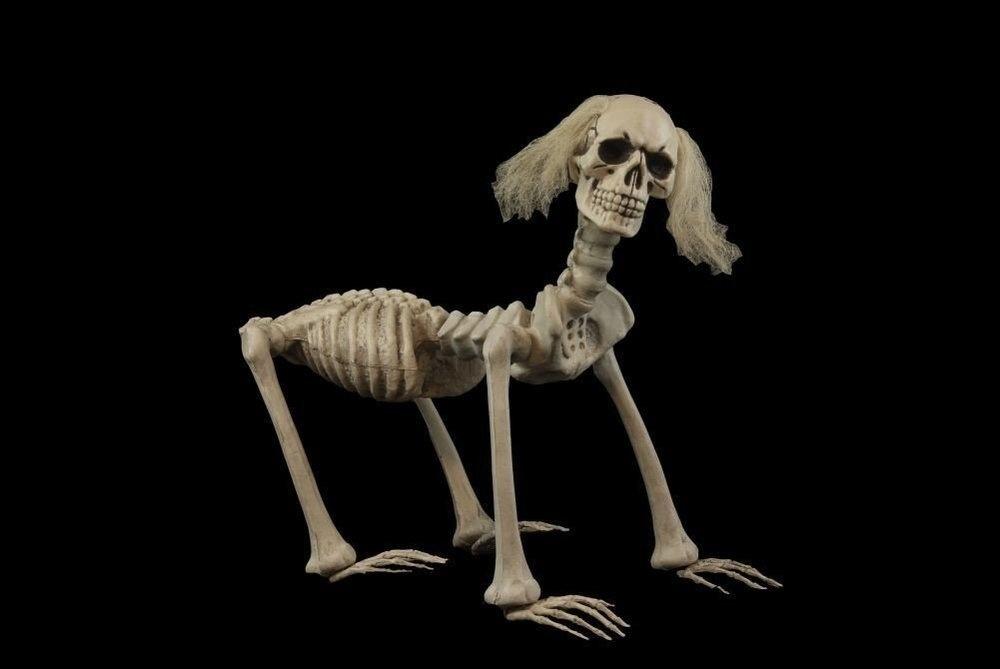 human skeleton for comparison. - #152374017 added by vorarephilia, Skeleton
