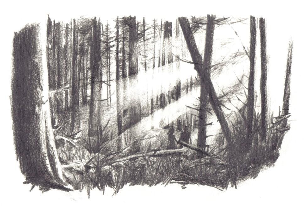 выяснилось, картинки черный лес карандашом частыми ветрами