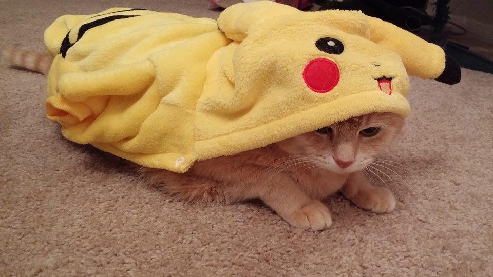 мудрено, пикачу картинки с кошками настройка ограничивает число